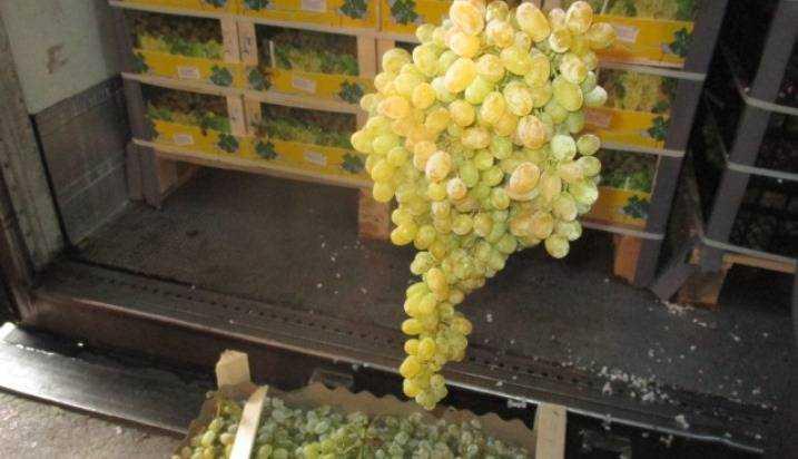 В РФ непропустили 40 тонн винограда изМолдовы