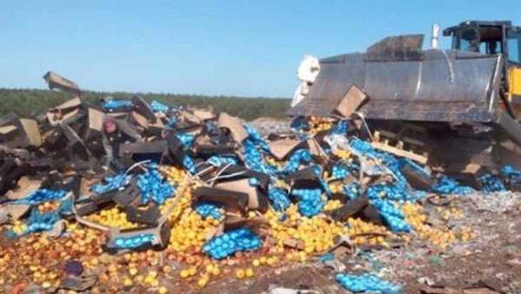 В Брянской области раздавили 30 тонн яблок из Молдавии