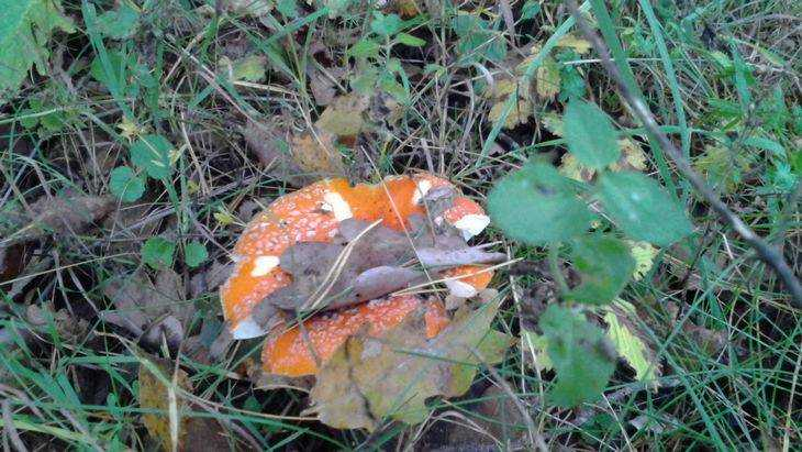 Вбрянском селе двое мужчин закусили грибами инепроснулись
