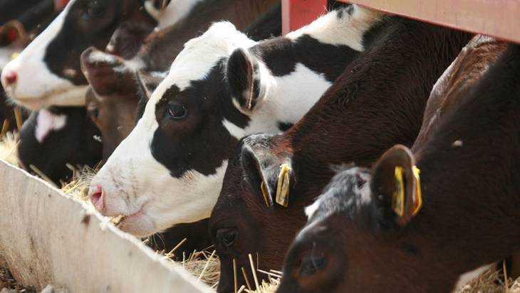 ВУнечском районе из-за нарушений остановили работу молочной фермы