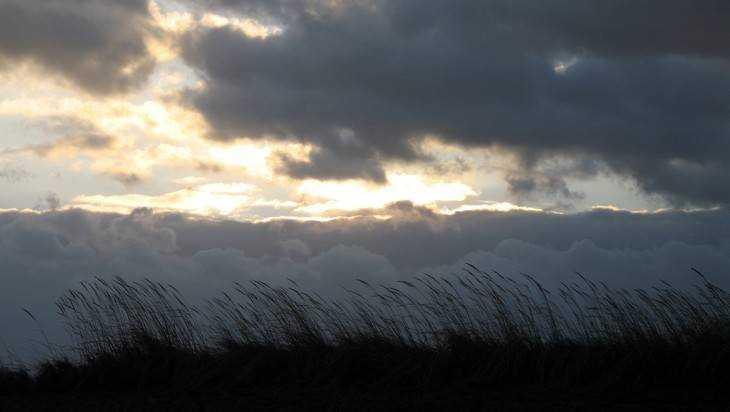 МЧС предупредило брянцев о вероятном усилении ветра до18 м/с