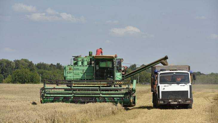 ВБрянской области собрали неменее млн тонн зерна