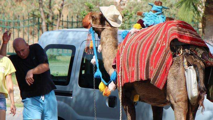 Верблюдов привезли водно изсел Брянской области