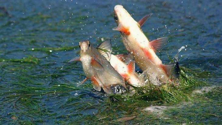 Вылов рыбы вПодмосковье ограничат с22марта