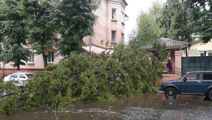 Дерево рухнуло прямо натроллейбус— Стихия вБрянске