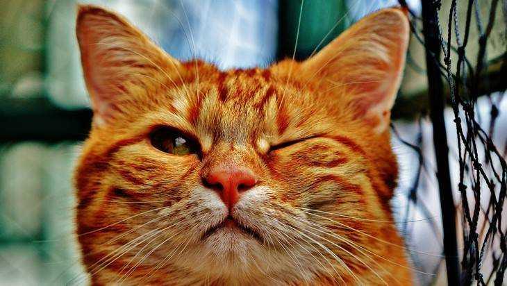 ВБрянске пройдет двухдневная выставка кошек