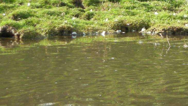 Генпрокуратура потребовала вернуть брянцам чистую реку Голубку