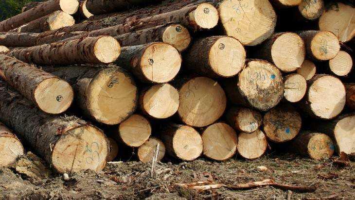 ВКлимовском районе лесничий спилил деревьев на3,1 млн руб.