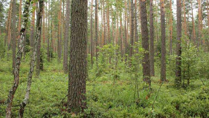 «Зеленый пояс» появится вокруг Брянска