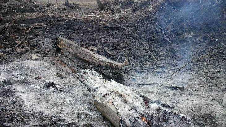 Брянские власти сообщили  озавершении небезопасной  поры лесных пожаров