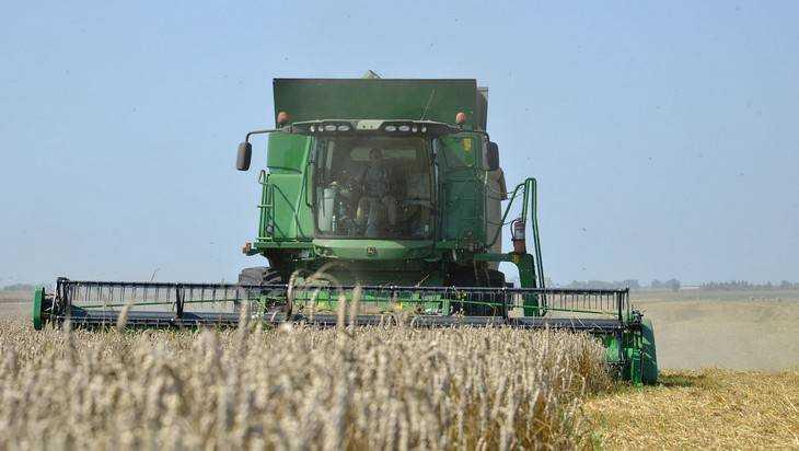 Урожай 2016: вБрянской области убирают зерновые икукурузу