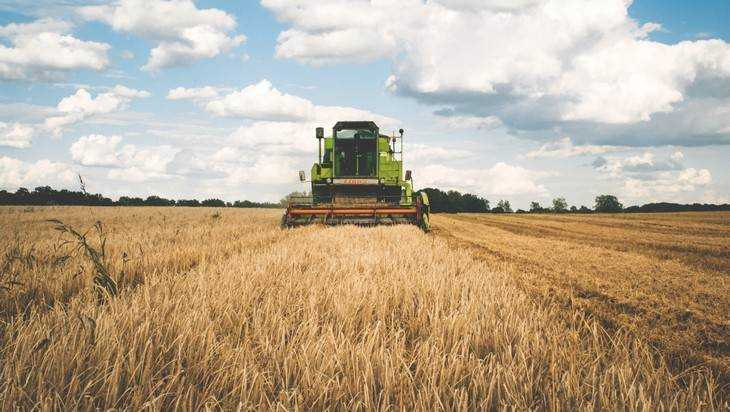 Black Earth Farming продаст бизнес в Российской Федерации