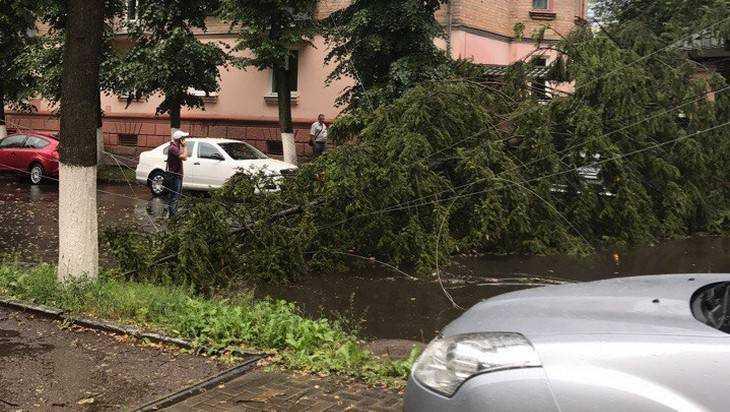 В Брянске ураган повалил дюжину деревьев
