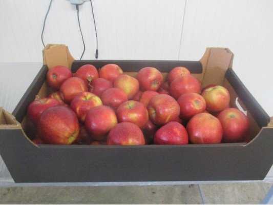 Брянские контролеры вернули поставщикам 250 тонн польских яблок