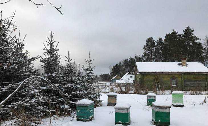 ВБрянской области 5января предполагается метель имороз
