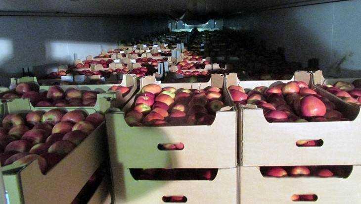 Набрянской границе 64 тонны санкционных яблок раздавили трактором