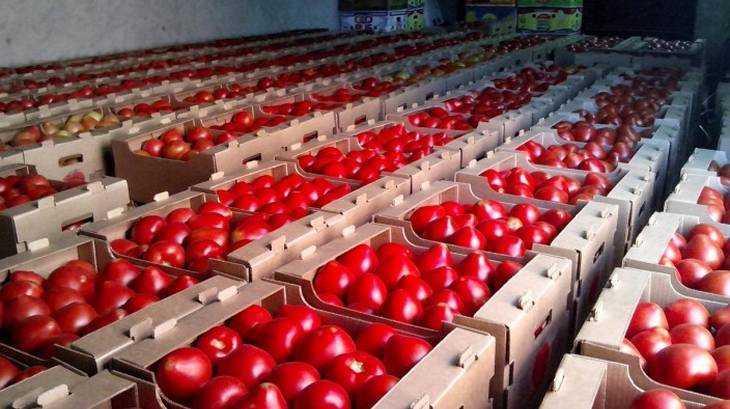 Первые турецкие томаты привезут вРФ к7ноября