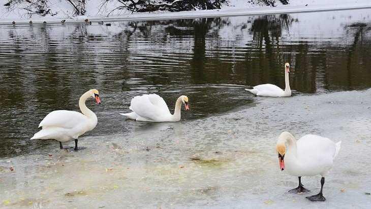 В Брянской области решили пересчитать зимующих птиц