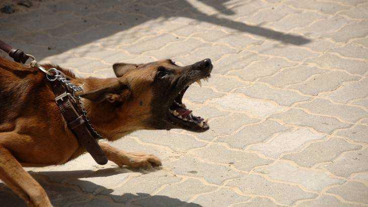 ВДуму внесен законопроект оштрафах занеубранные отходы жизнедеятельности собак