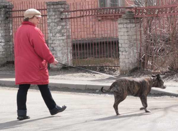 Канун приговора по делу Добржанской: собака требует ухода