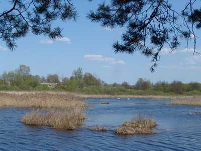 Брянским рыбакам чиновники предложили радиационные озера