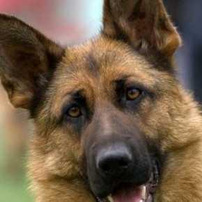 В Брянске охранника воинской части будут судить за убийство собаки