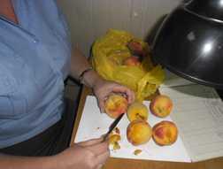 В Брянской области перехватили персики с плодожоркой