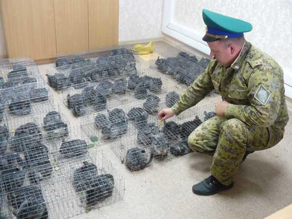 Брянские пограничники перехватили пушистую контрабанду