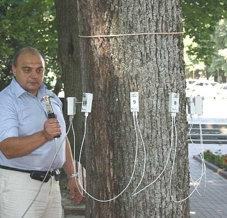В Брянской области появился томограф для деревьев