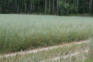 В Брянской области ввели режим ЧС: селяне потеряли миллиард рублей