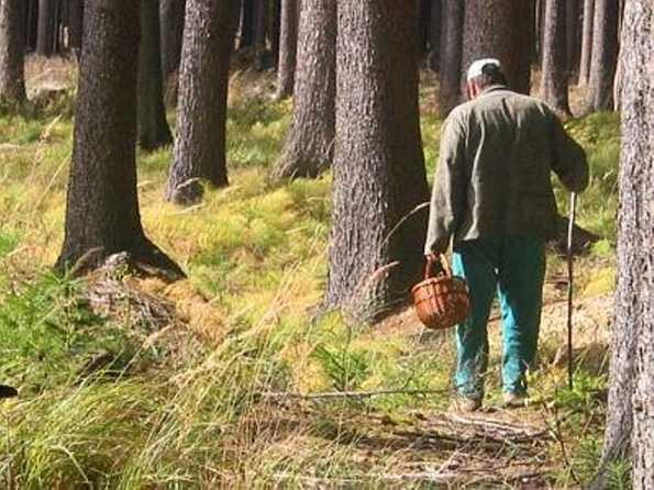 В брянском лесу на «тихой охоте» потерялись женщина и ребенок