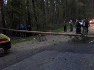 Под Навлей водитель врезался в дерево и погиб