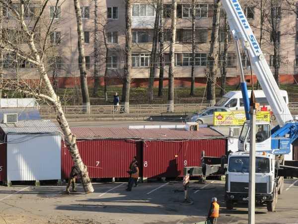Брянск стал городом песчаных вихрей и вырубаемых деревьев