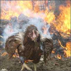 Житель брянского села грел любимых кур и нечаянно их сжег
