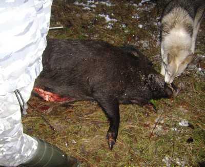 Брянский охотник погиб от пули товарища