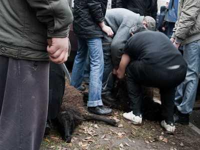 Мимо особняка Денина собаки таскают окровавленные шкуры