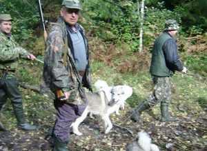 Австралийских коров «Мираторга» жрут брянские волки