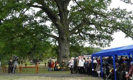 Трехсотлетний брянский дуб объявили памятником природы