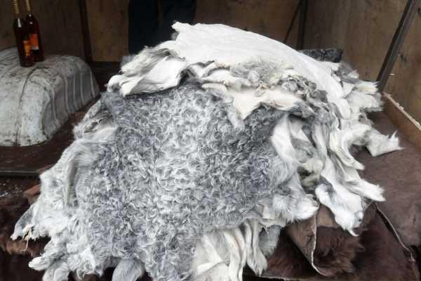 Брянские таможенники изъяли на границе у молдаванина коньяк и овечьи шкуры