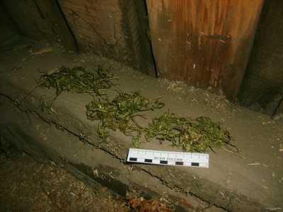 Килограммы марихуаны наркодельцы продавали в центре Брянска
