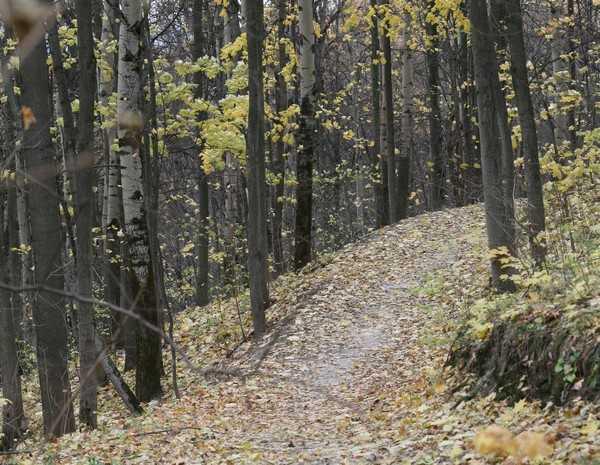 На брянской трассе лесовоз задавил психически больного пенсионера