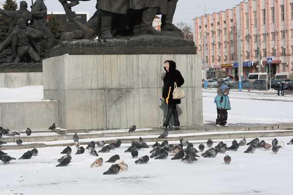 В Брянске массово гибнут голуби