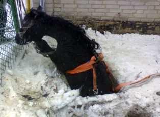 Житель Брянской области  умер, подняв с земли  упавшую лошадь