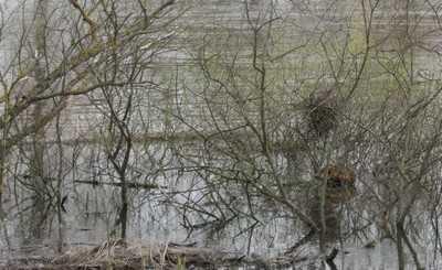 Четыре брянских деревни лишились единственного моста