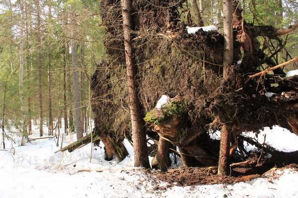 В брянском заповеднике проснулся первый медведь