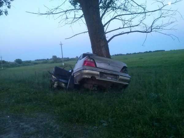 Брянский водитель распростился с жизнью, врезавшись в дерево