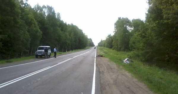 Ночью в Жуковском районе белорус сбил лося