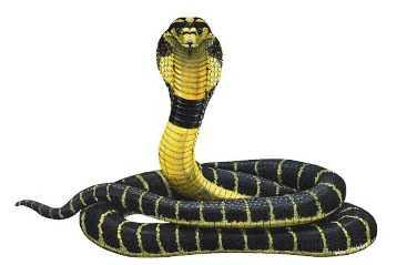 Сбежавшие от брянского разводчика змей  кобры  перепугали весь Карачев