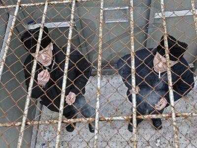 Брянским зекам дали новый срок за избиение солагерников