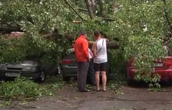 Ураганный ветер вновь нарушил электроснабжение в Брянской области